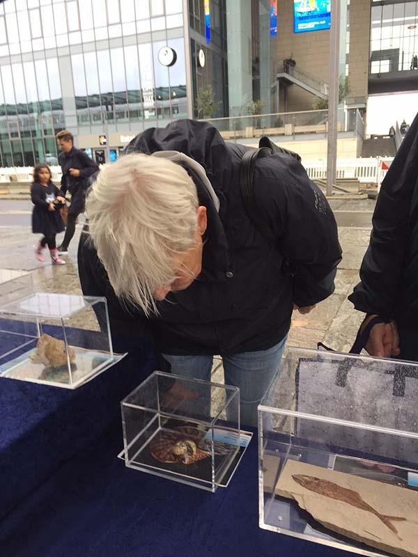 Danimarka Fosil Sergisi