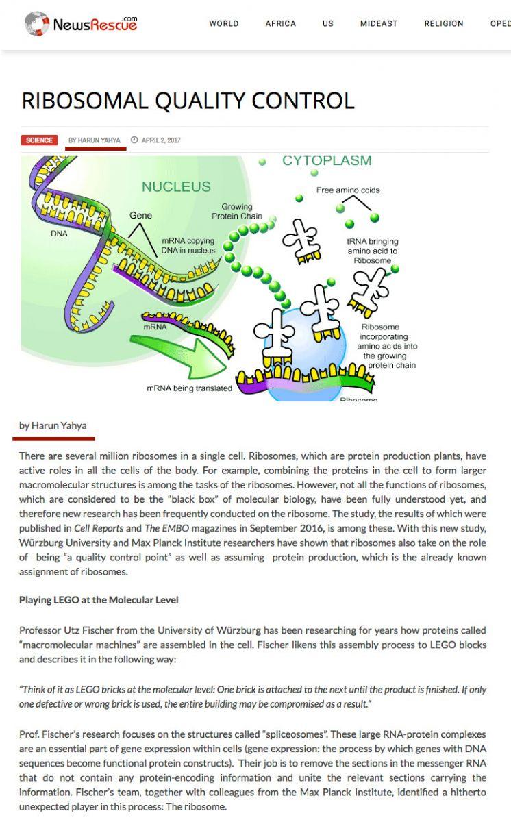 Ribozomal Kalite Kontrol