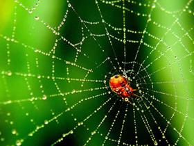 Örümcek Doğa Madde  harunyahya.co