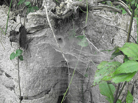 Örümcekler
