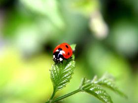 İman İman Hakikatleri Böcek Böcekler Hakikat forum