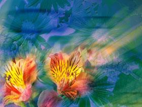 Allah Çiçek Sanat forum