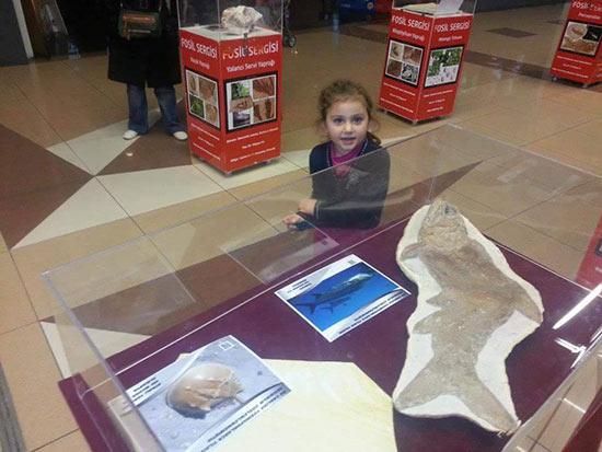 kayseri park avm fosil sergisi