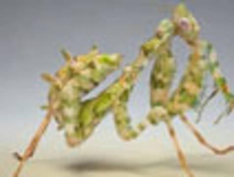Böcek Böcekler Mucize Yaratılış forum